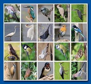 Serie 49 - vogels