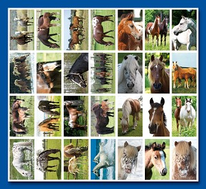 Serie 126 - paarden