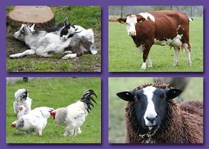 Serie 229 - boerderijdieren