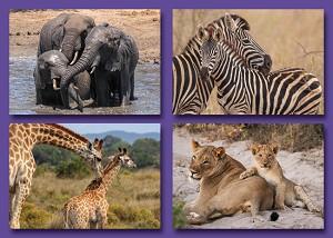 Serie 362 - wilde dieren