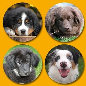 Serie 118 - honden