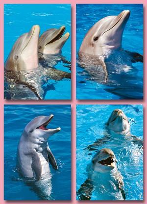 Serie 11094 - dolfijnen koppen